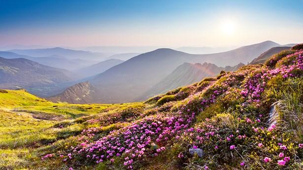 תחת סמכותו של הבורא, כול הדברים מושלמים הם
